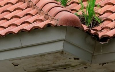 When to replace your fascias and soffits